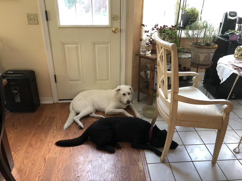 Zeus and Olivia
